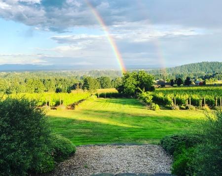 Terra Vina Vineyard - Vineyard Rainbow