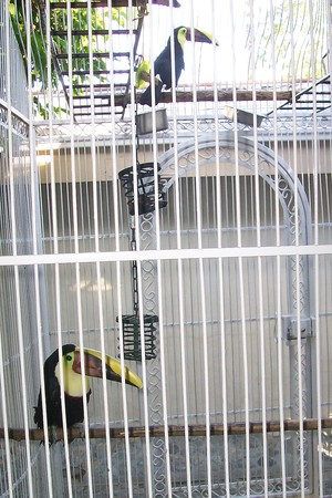 Coco Palm - Coco Palm Toucan Mascots Ricky & Lucy