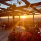 Cordiano Winery - Patio Dreaming