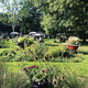 The Roebuck Inn - Beautiful English Country Garden with Eatery